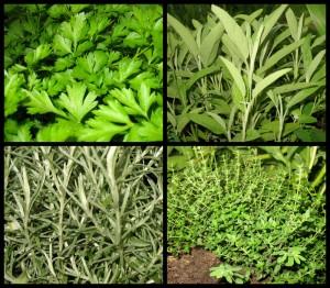 parsley-sage